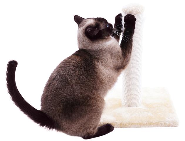 猫はどんな場所を爪とぎに選ぶの?