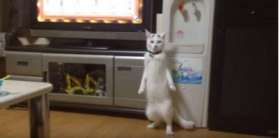 背筋がピン!立っちに応える猫