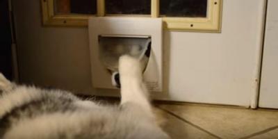 ハスキー犬、猫用ドアから鼻だけニョキ