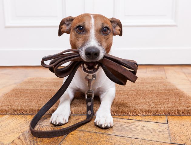 家族の同意は得ましたか? 犬を飼う際の7つの心構え!