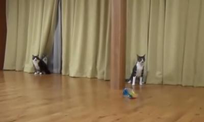 くつろぎ中、突然の雷に慌てる猫たち