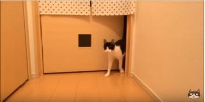 お帰り~!玄関まで2秒で駆けつける猫