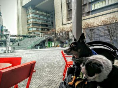 【梅田駅】愛犬と一緒にワンコインモーニング。レストラン、ペット可「GARB MONAQUE(ガーブ モナーク)」【大阪府大阪市】