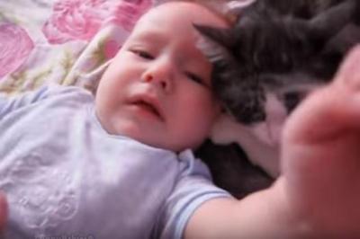毛をむしられても赤ちゃんの子守をする猫