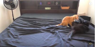 ベッドメイキングは猫もお手伝い?