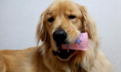 ボーッとした顔でカップをかじる犬