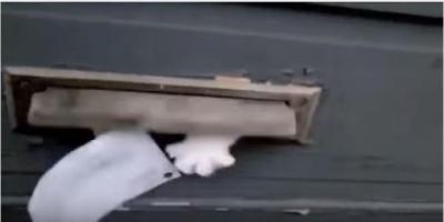 郵便物を拒否する猫vs郵便配達