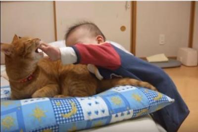 我慢強い猫。しっぽを囓られても手は出しません
