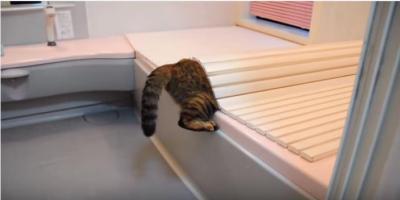 夫婦喧嘩にまで至った猫のイタズラ