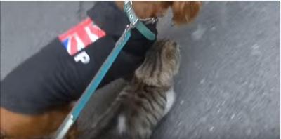 犬が大好き過ぎる猫、スリスリ攻撃