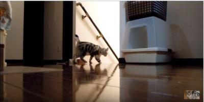 怒った猫が華麗な跳び蹴り!