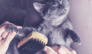 抜け毛の季節に向けて!愛猫へのブラッシングの重要性