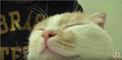 飼い主さんのゴッドハンドにとろける猫