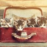 ストレス解消?ストレスの元?「猫の多頭飼い」の真実