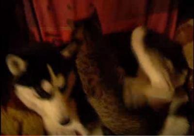 猫のマッサージがくすぐったい犬