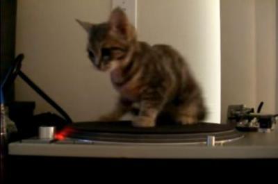 レコードプレーヤーの上で目を回す猫