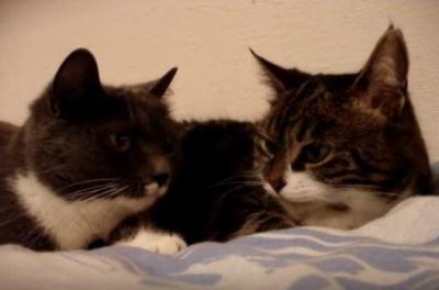 仲良し猫のおしゃべりが可愛すぎる