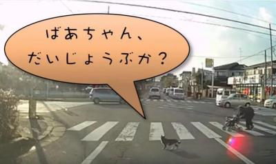 横断歩道を渡るおばあさんを気遣う猫