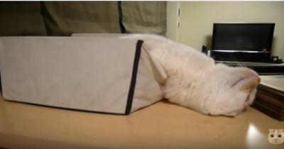 猫が箱から溶け出している?