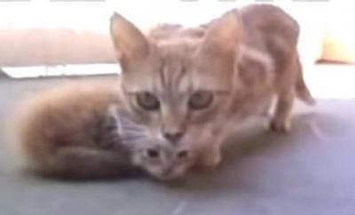 撮影中の子猫を連れて帰る親猫