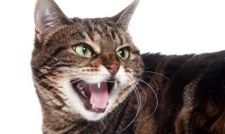 【徹底比較:行動編】怒る原因&行動にみる犬と猫の違い