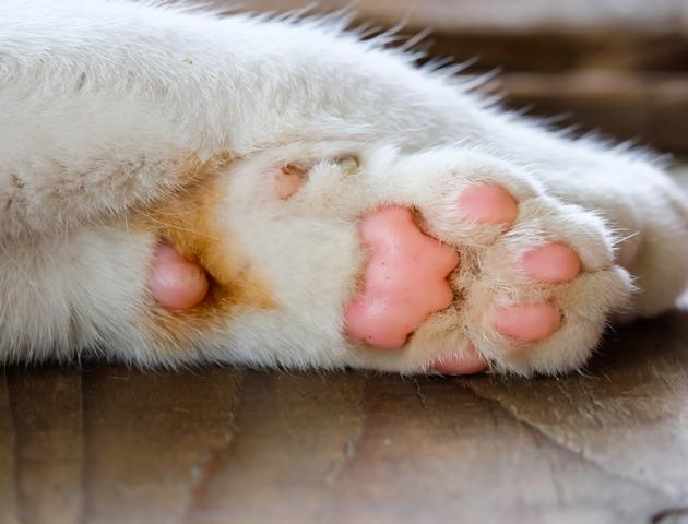 【徹底比較:カラダ編】犬と猫の肉球には違いがある?