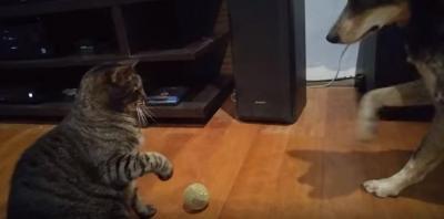 ボールを取らせて下さい!猫vs犬