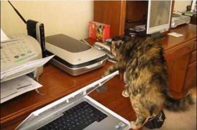 FAXに怯える猫。コードに八つ当たり