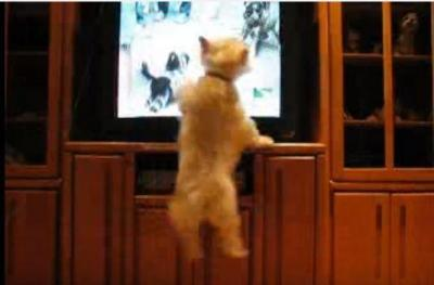 テレビの前でジャンプ!ジャンプ!飛び跳ねる犬
