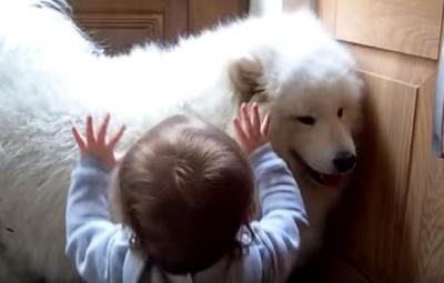 たまらなく可愛い!フワフワ犬と女の子