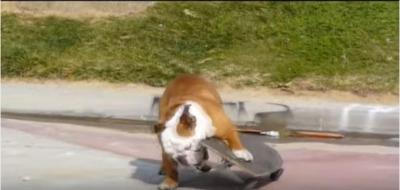 颯爽とスケートボードを乗りこなすブルドッグ