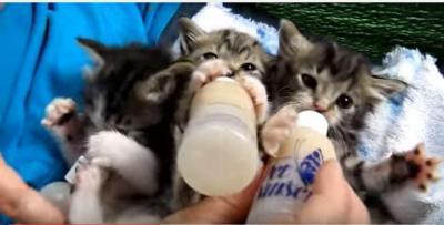 子猫が並んでミルクを飲む姿にキュン!とします