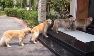 足拭きは順番に!お行儀よく並ぶ犬たち