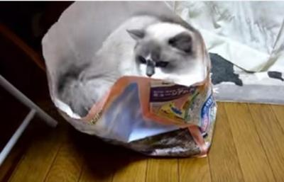 数年前は入れたのに・・新聞回収の袋に入る猫