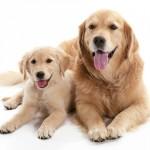 メリット、デメリットを知ろう! 犬の「多頭飼い」の注意点