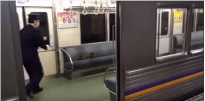 猫vs車掌さん、電車に居座る猫