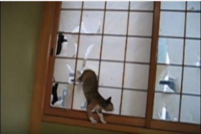 障子を破る解禁日に猫大はしゃぎ
