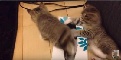 ティッシュ箱の上に子猫、その下には・・・!?