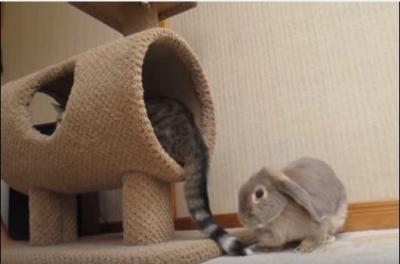 確信犯の猫vsうさぎパンチ
