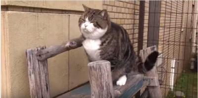 ポッチャリ猫が、はしごでジタバタ