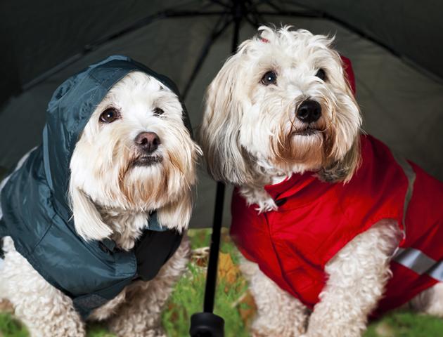 雨の日でも散歩できる工夫をするのもおすすめ