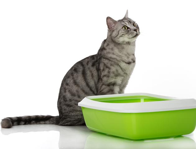 見たことある? 猫のマーキングとはどんなものか