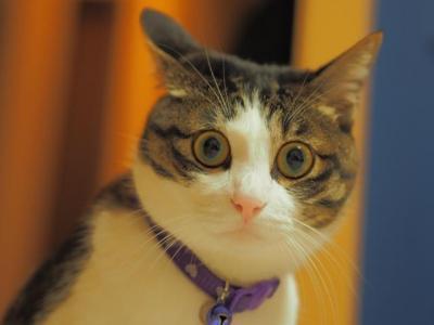 猫にトイレを教えるのは簡単って本当?