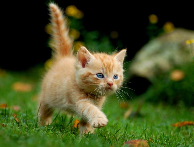 【しつけ:脱走編】命の危機にも繋がる!? 愛猫の脱走を防ぐには