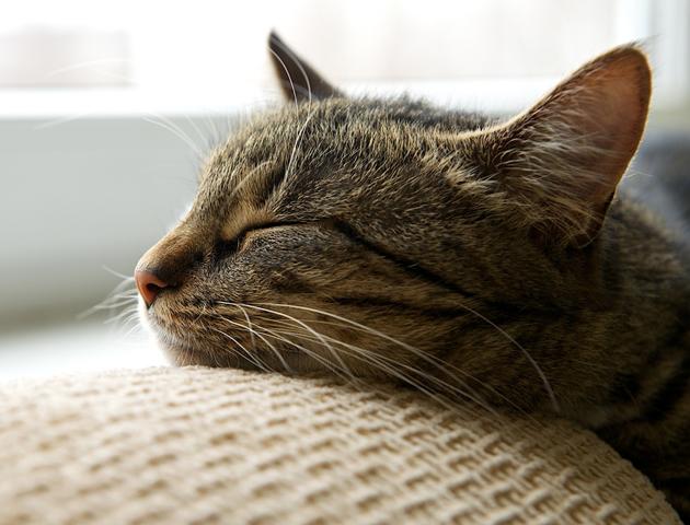 脱走は家猫にとって命の問題