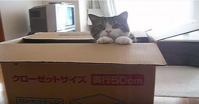 猫が大きな箱へジャンプ!成功するのか?