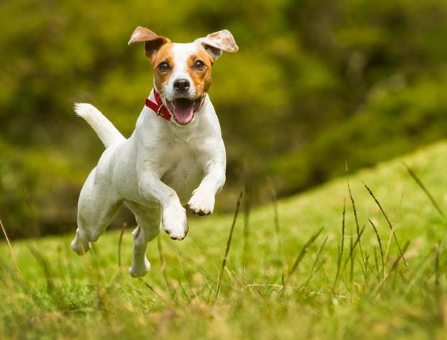 元気に走ってほしいから! 犬の関節トラブル対策