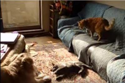 猫同士の喧嘩に癒やし系犬が仲裁