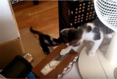 遊びに夢中でゴミ箱に落ちる猫