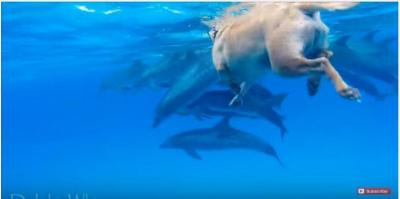 イルカがお出迎え、仲良しなイルカと犬